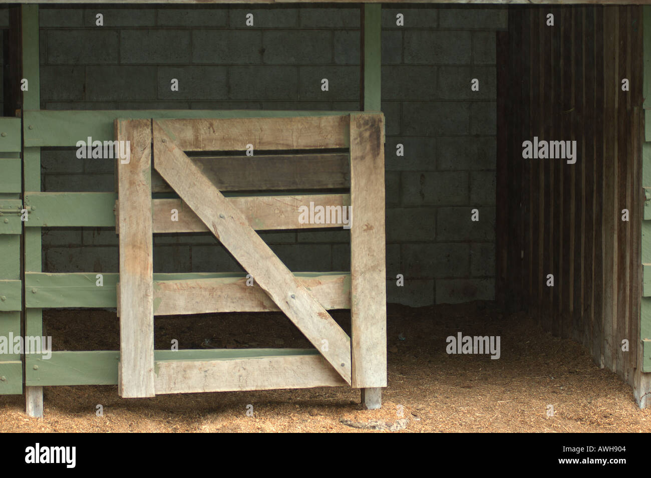 Shut The Gate After The Horse Has Bolted Empty Horse