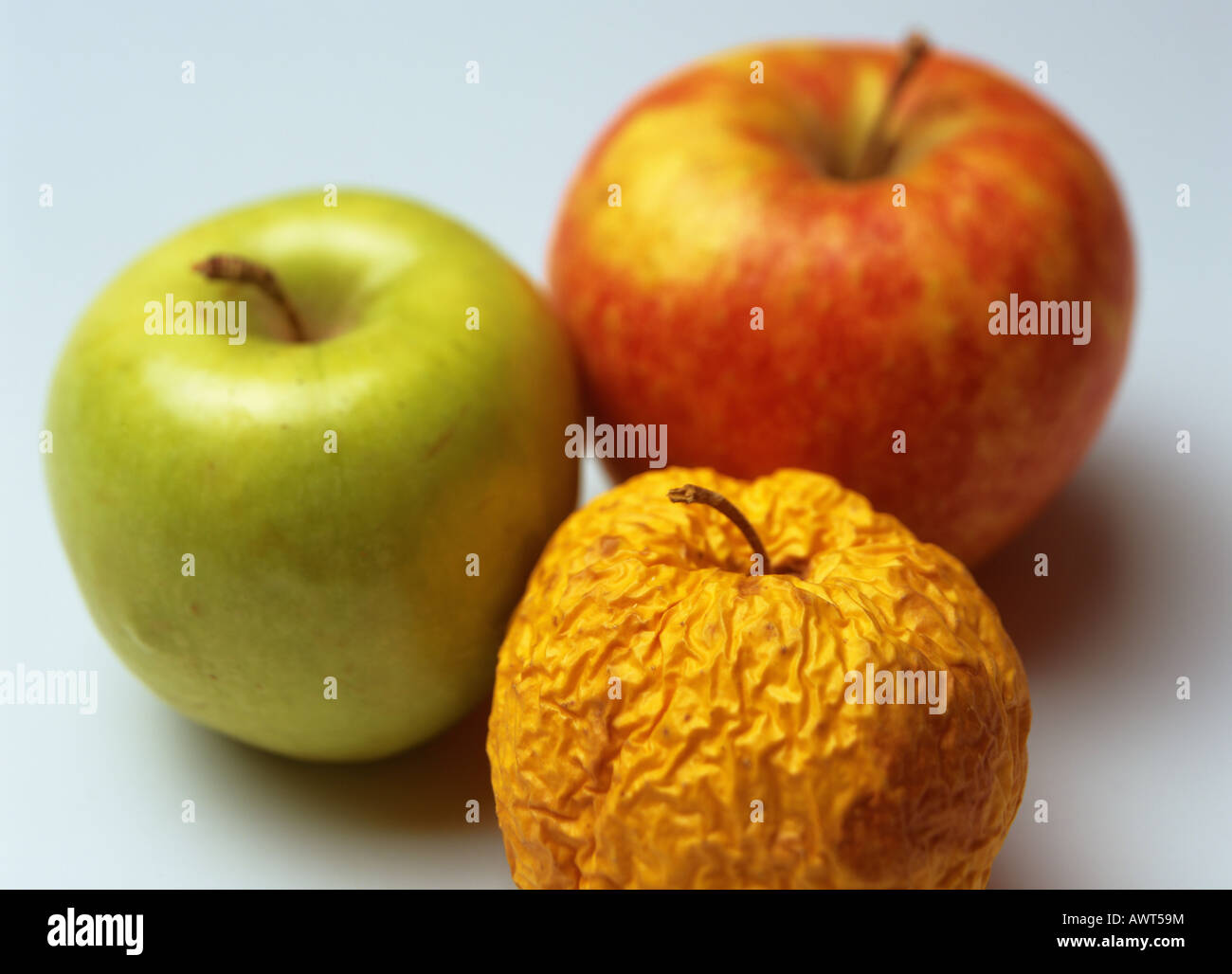 one wrinkled yellow golden delicious with fresh granny smith and pink stock photo royalty free. Black Bedroom Furniture Sets. Home Design Ideas
