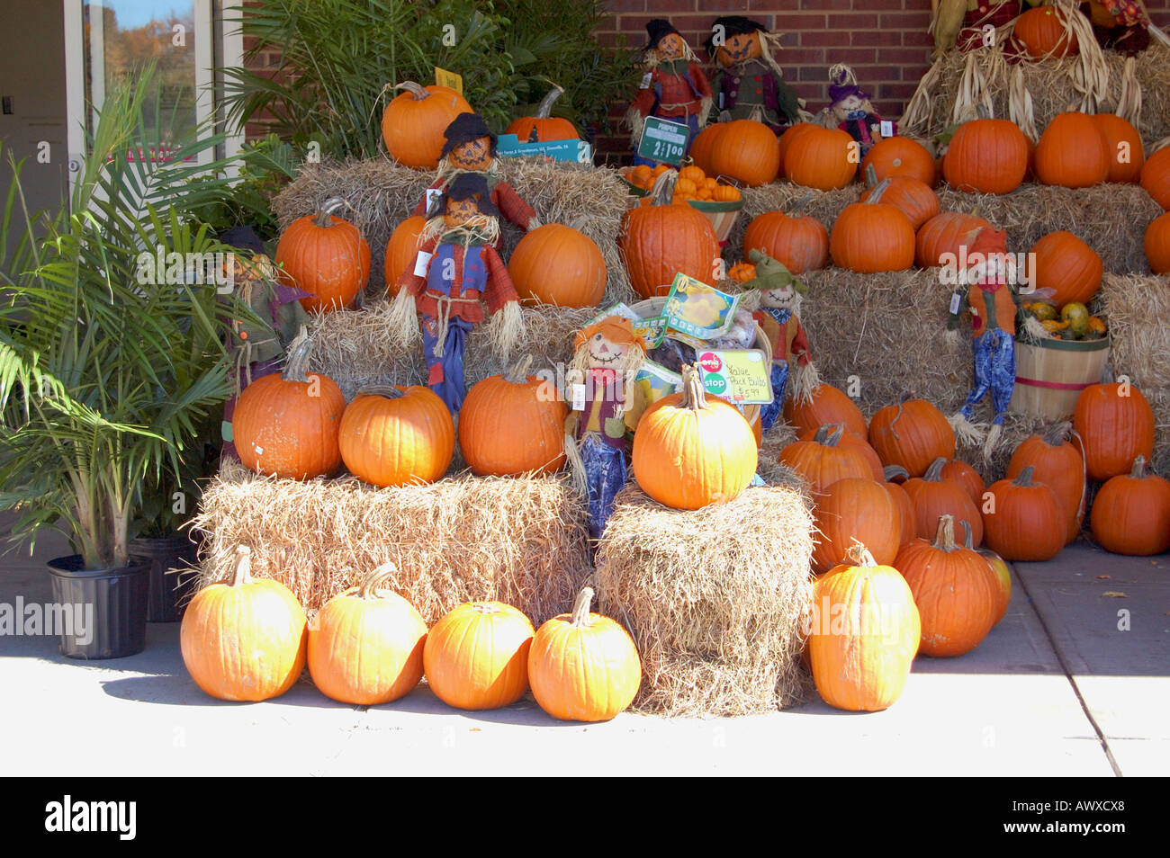 How to store pumpkins - Pumpkins On Display Outside An American Store