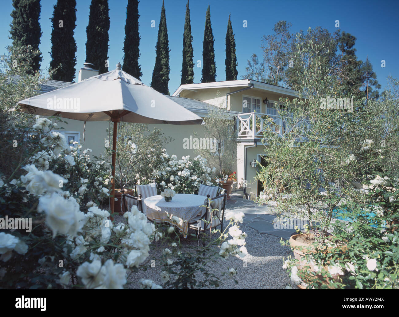 stock photo white roses and white umbrella above garden furniture on gravel patio with house in the background