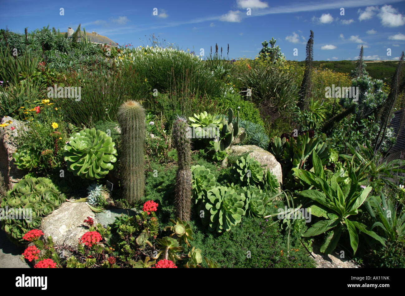 Uk Tropical Plants Part - 27: Stock Photo - Sub Tropical Plants In The Gardens Of The Famous Out Door  Minack Theatre, South, Cornwall, UK
