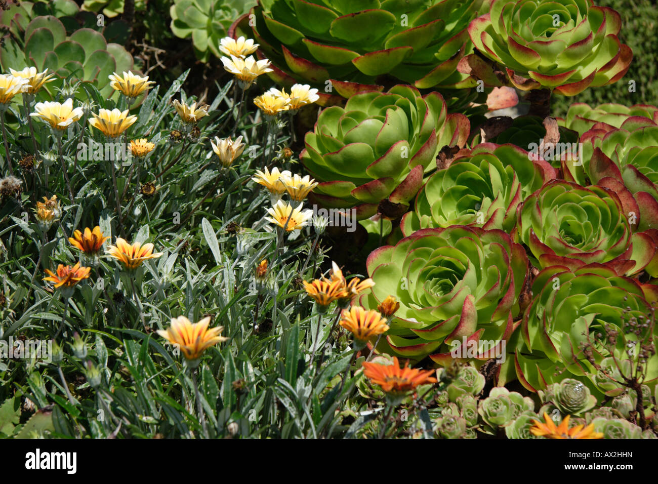 Uk Tropical Plants Part - 38: Stock Photo - Sub Tropical Plants In The Gardens Of The Famous Out Door  Minack Theatre, South, Cornwall, UK