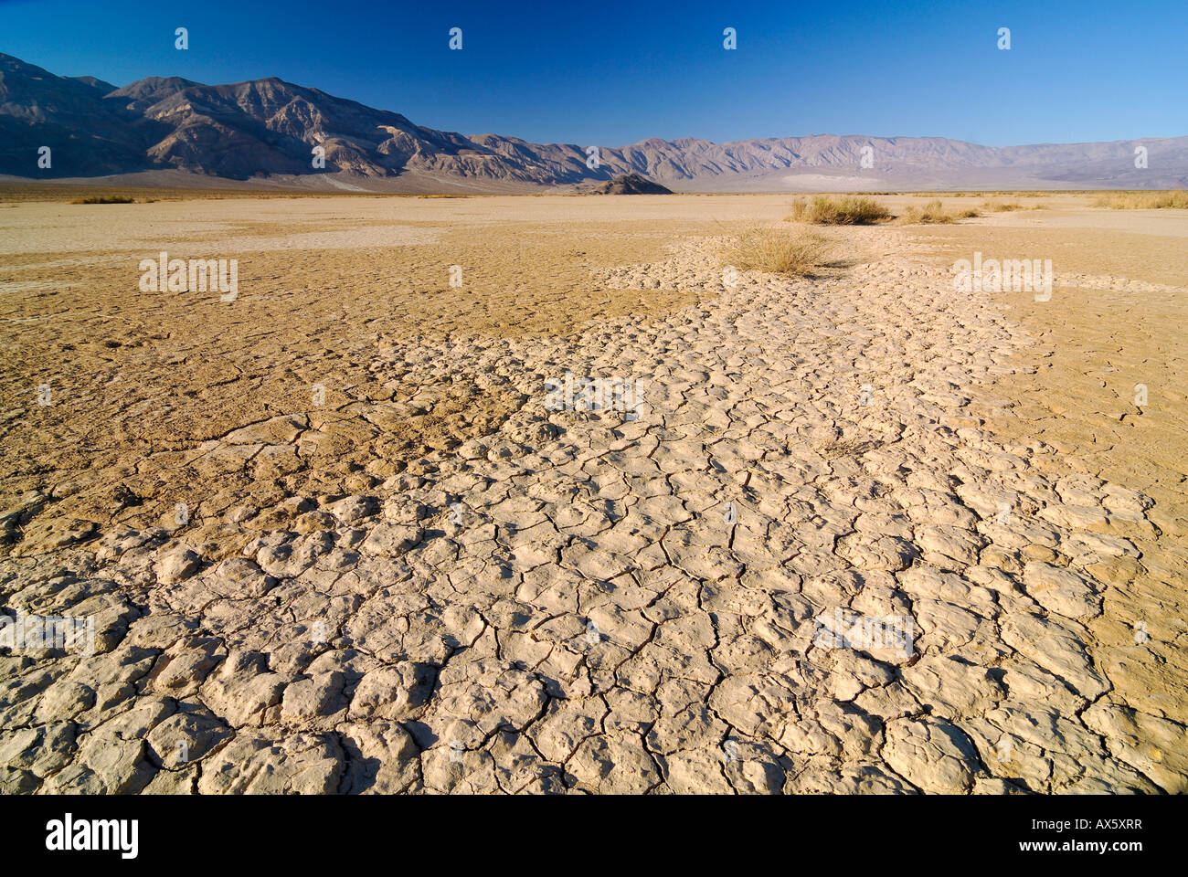 Desiccation cracks, arid loam soil at Stovepipe Wells in ...