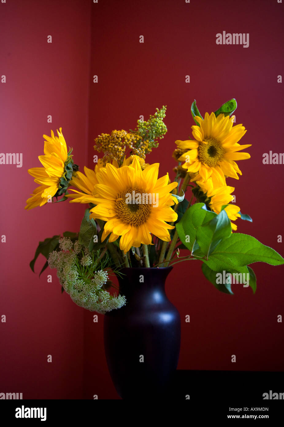 Background image mdn - Stock Photo Sunflowers In A Vase Still Life With Vivid Red Background