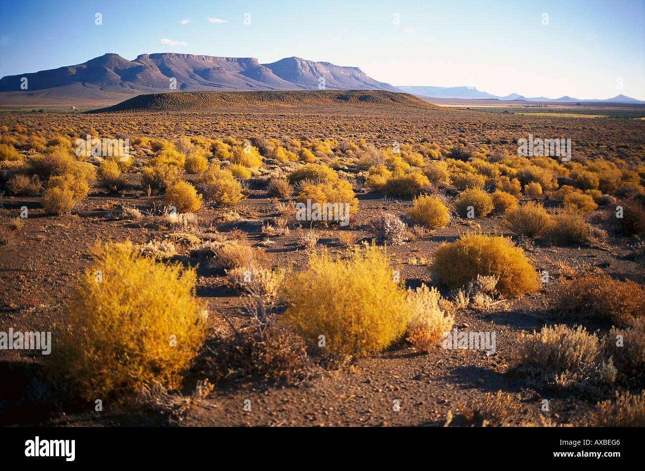 Adobe Mountain Desert Park  Sahuaro Central Home