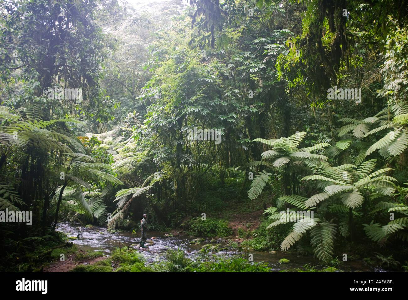 africa uganda bwindi impenetrable national park tropical
