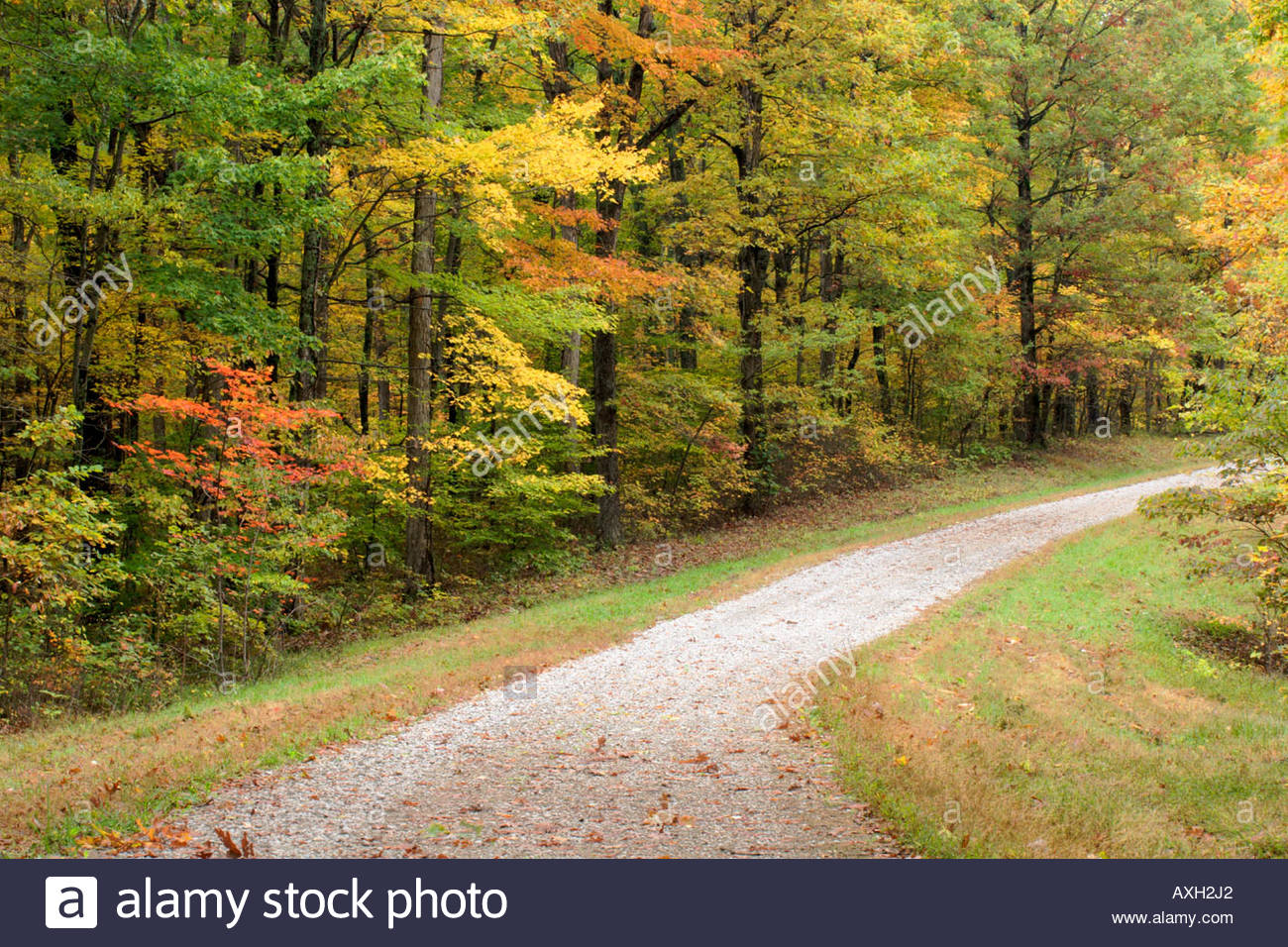 Beech Maple Forest ~ Road leading through dogwood and beech maple tree forest
