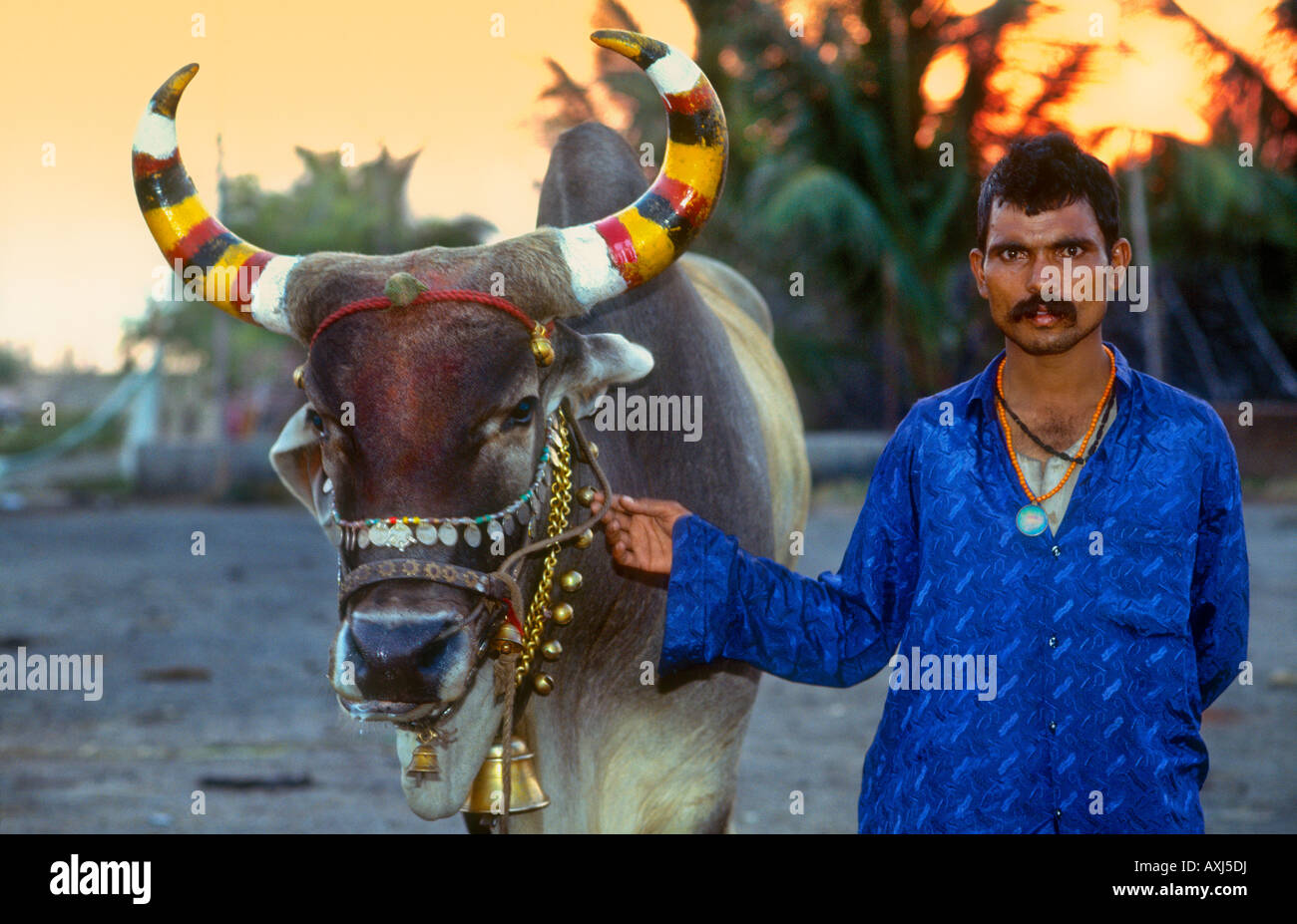 Hindu Man With Painted And Decorated Sacred Cow India
