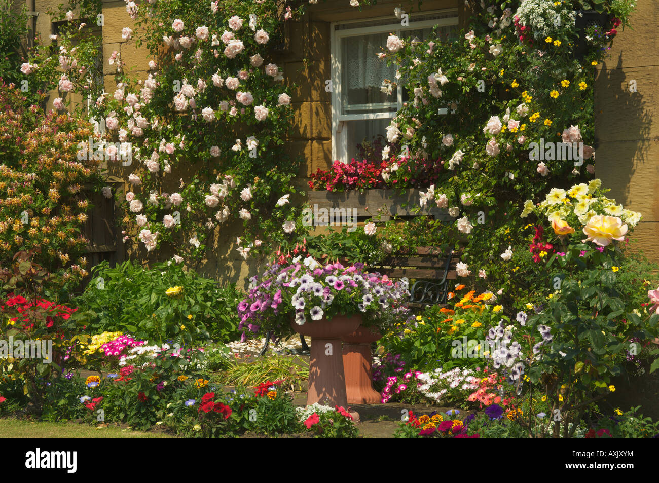 Massed Flowers In A Traditional English Garden Denwick Alnwick