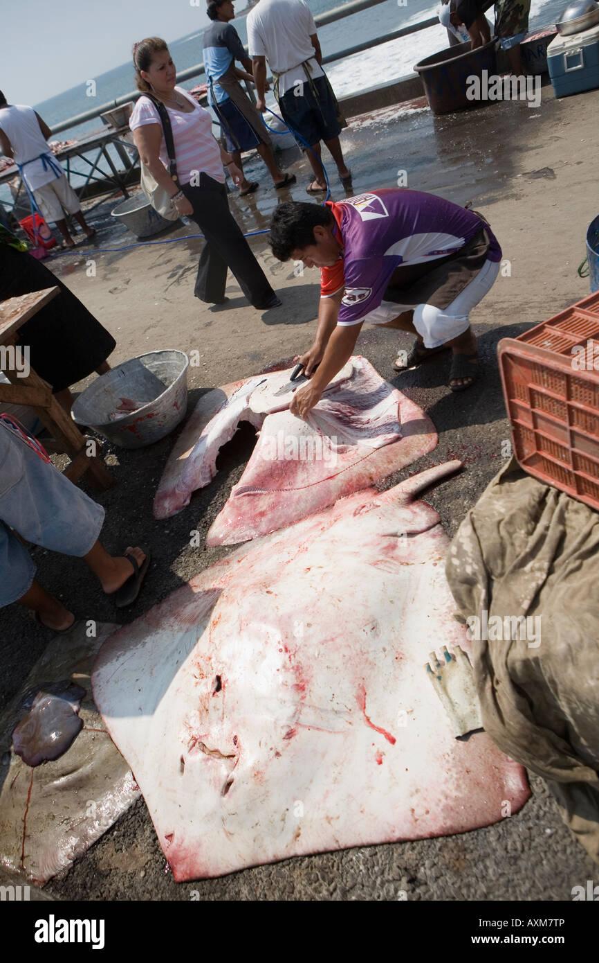 Cutting up huge manta ray fishing village of la libertad for Tp fish market
