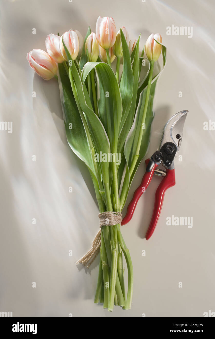 Bunch Of Pink Tulips With Garden Clippers Stock Photo Royalty Free