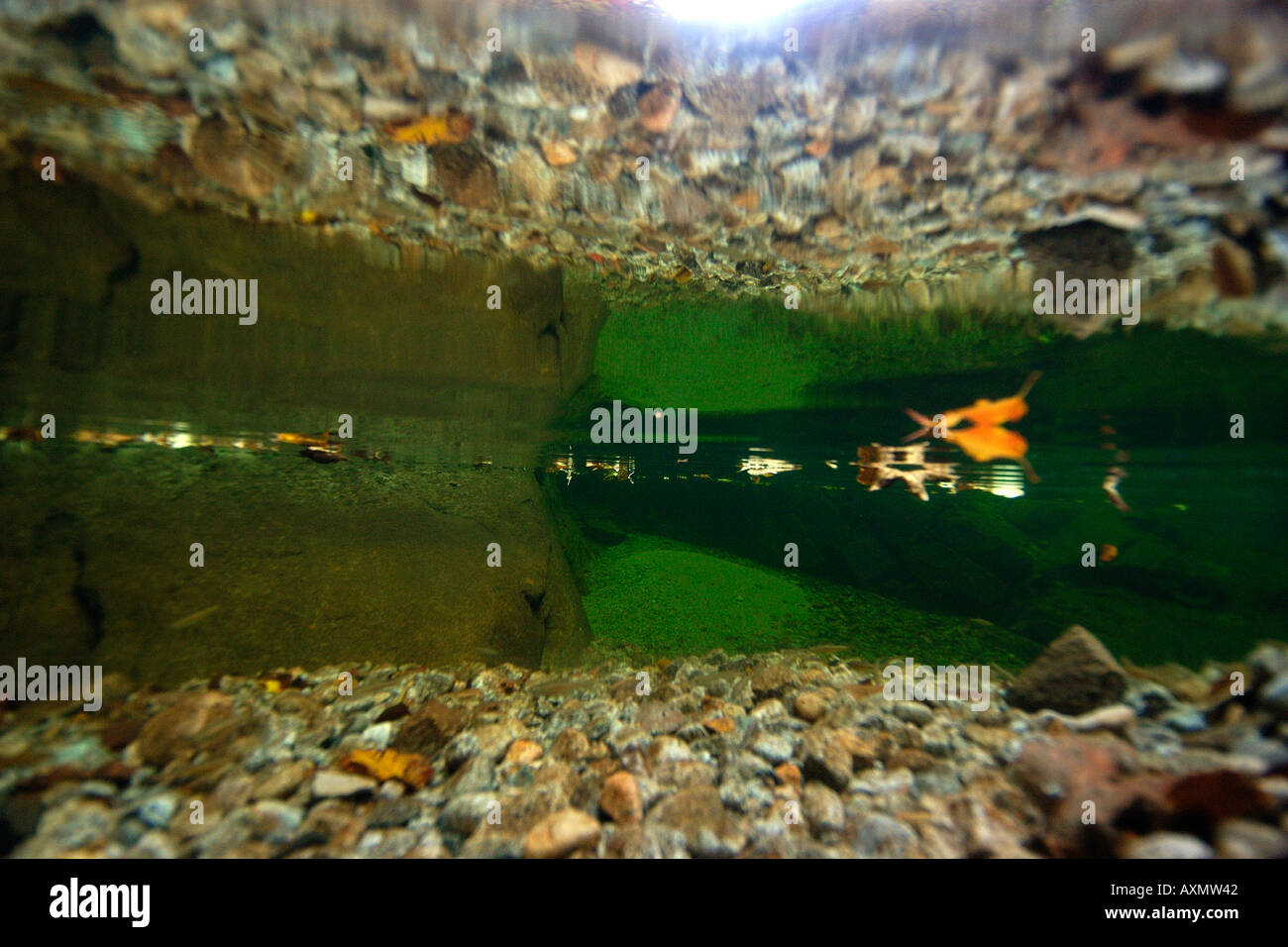Freshwater fish korea - Stock Photo Surface Reflection In Natural Freshwater Seoraksan National Park Gangwon Province South Korea
