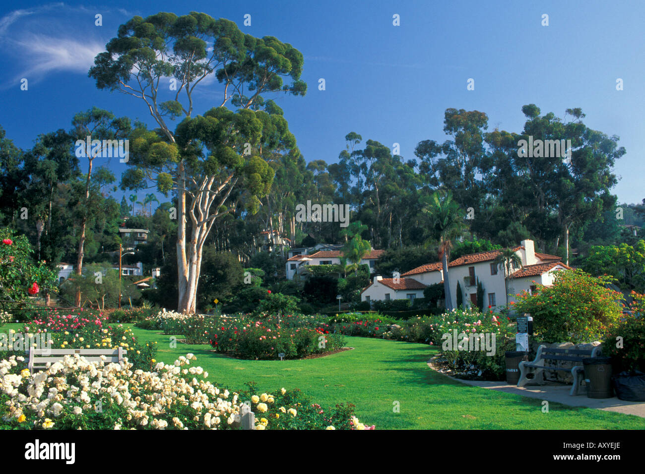 Homes And Trees In Spring Next To Mission Park Rose Garden