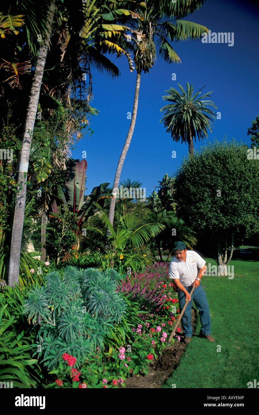 Groundskeeper Hoe Soil Dirt In Lawn Garden Plants At The Four Seasons  Biltmore Resort In Santa Barbara California