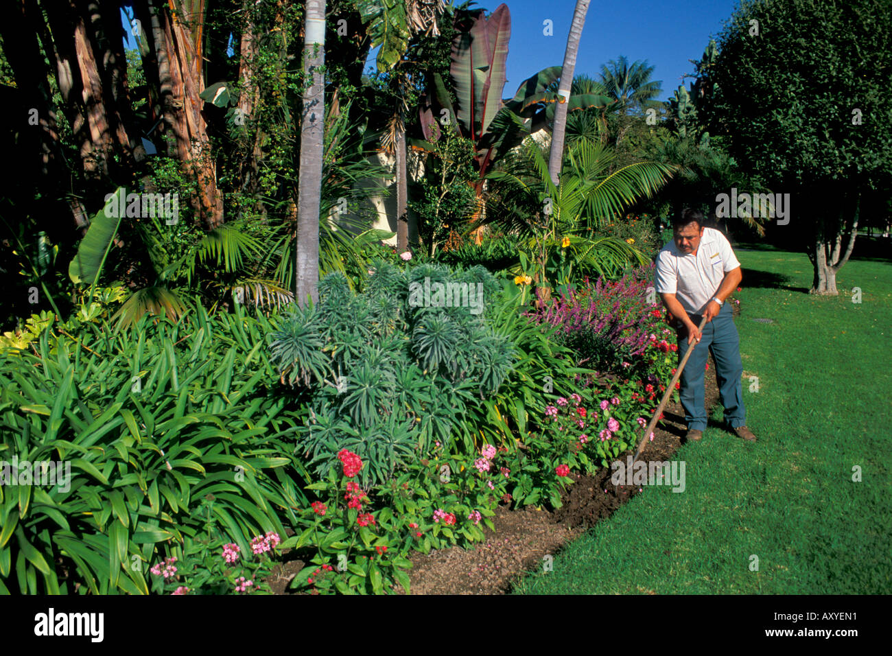 Groundskeeper hoe soil dirt in lawn garden plants at the for Gardening 4 all seasons