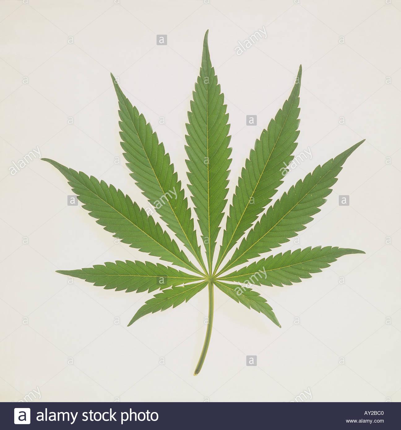 drugs leaves quotes marijuana - photo #19