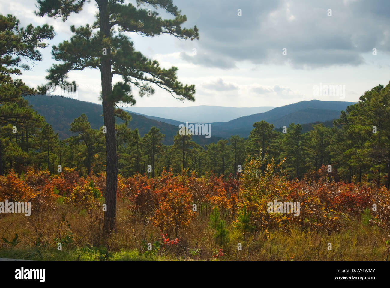 an-autumn-view-near-sunset-from-talimena