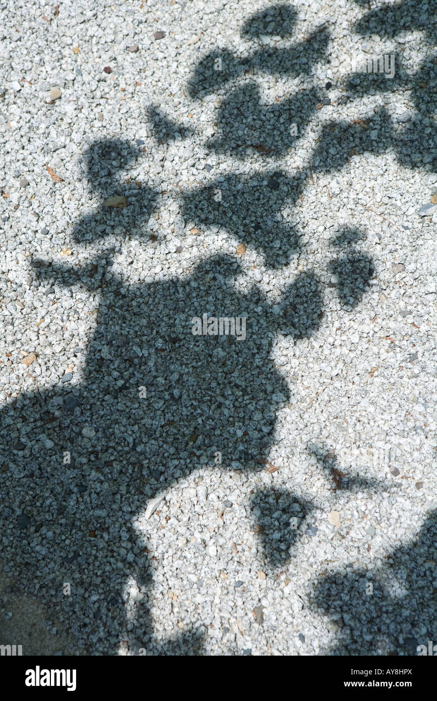 shadow of tree leaves on gravel stock photo royalty free image