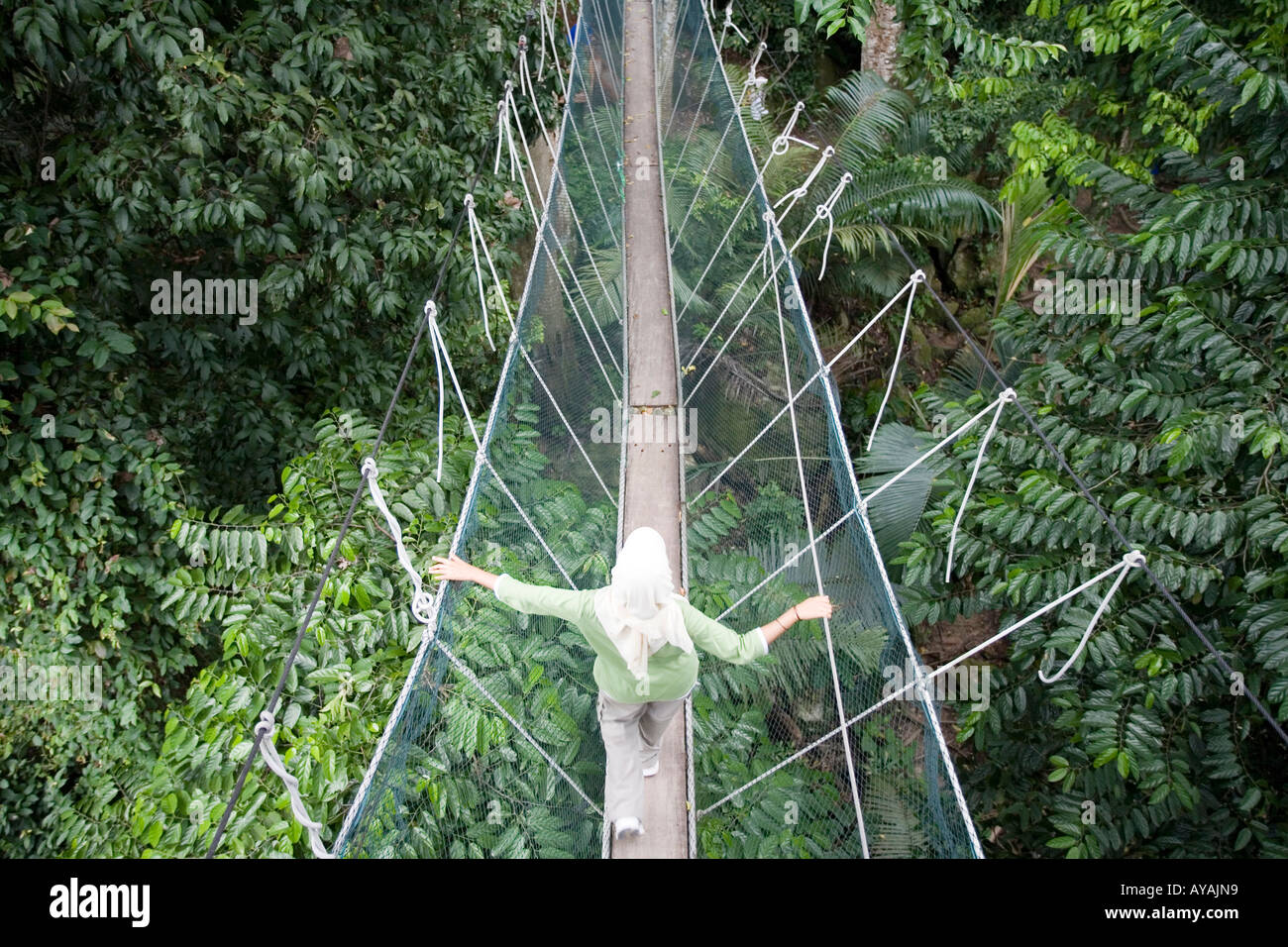 Malaysia Kuala Lumpur Rainforest Canopy walkway above trees and forest floor at Forest Research Institute of Malaysia in Kepong & Malaysia Kuala Lumpur Rainforest Canopy walkway above trees and ...