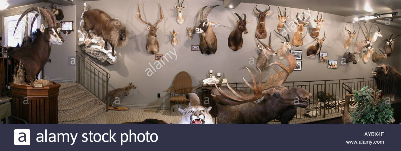 Trophy room collection of big game heads stock photo for Big game room