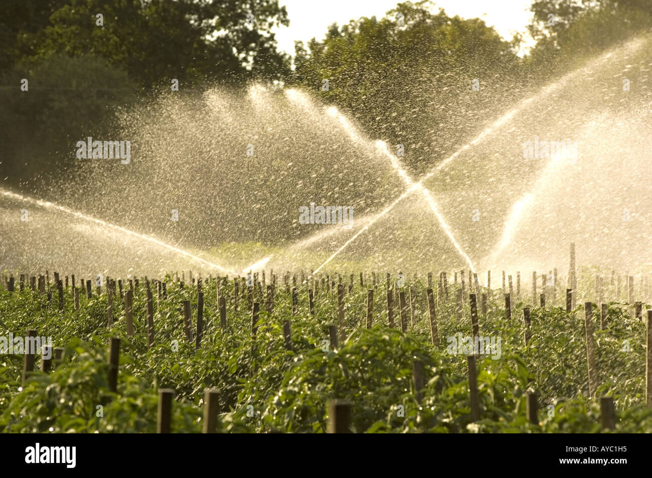 Irrigation Sprays Watering Farm Crops Stock Photo, Royalty Free ...
