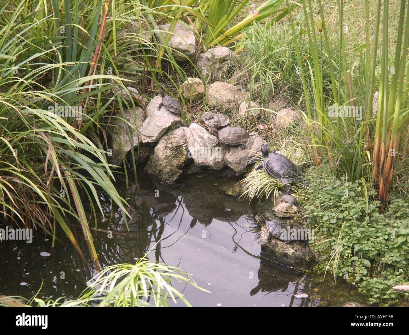 Ornamental ponds 100 images ponds clio mi creative for Ornamental pond fish uk