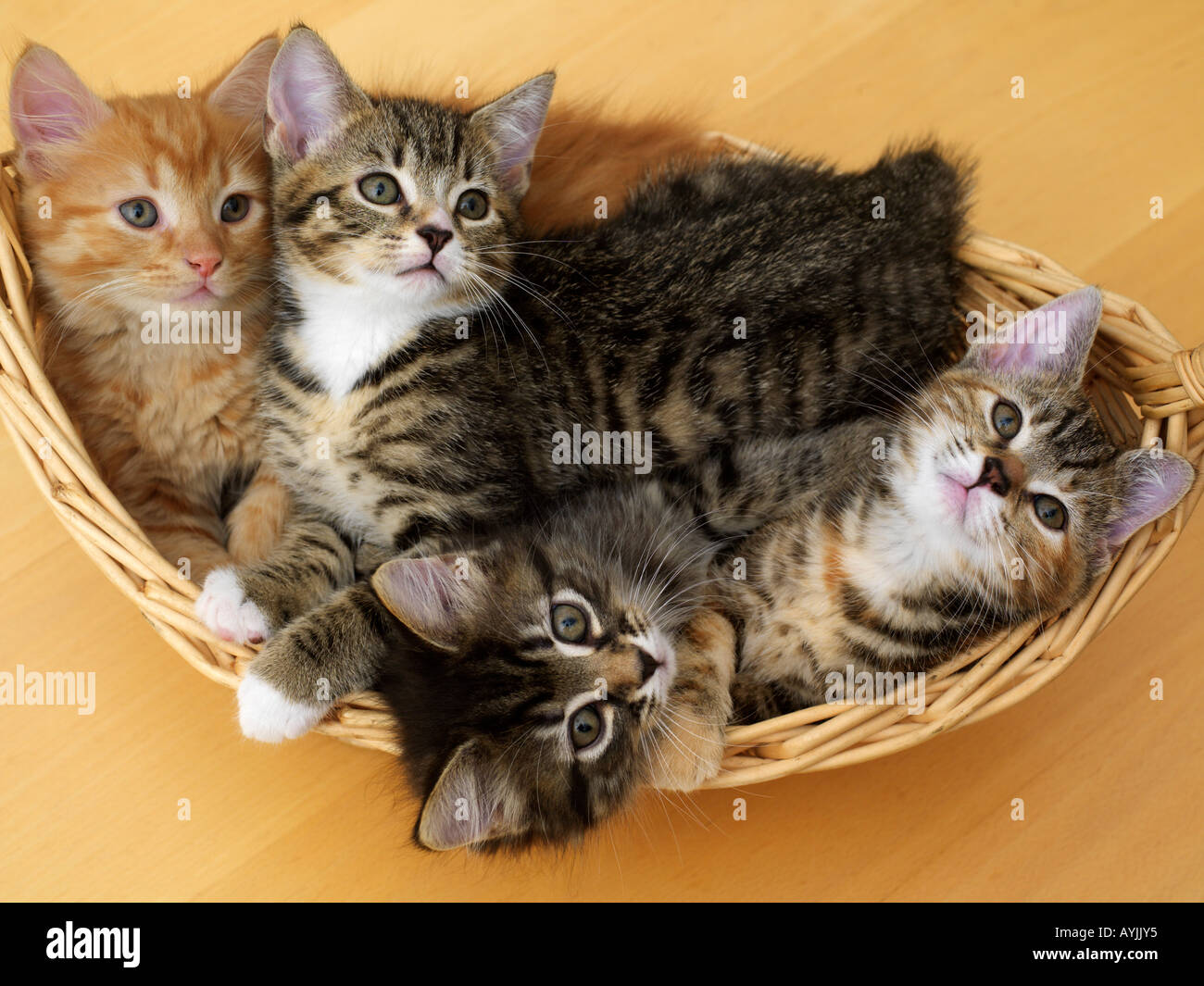 kitten wheezing