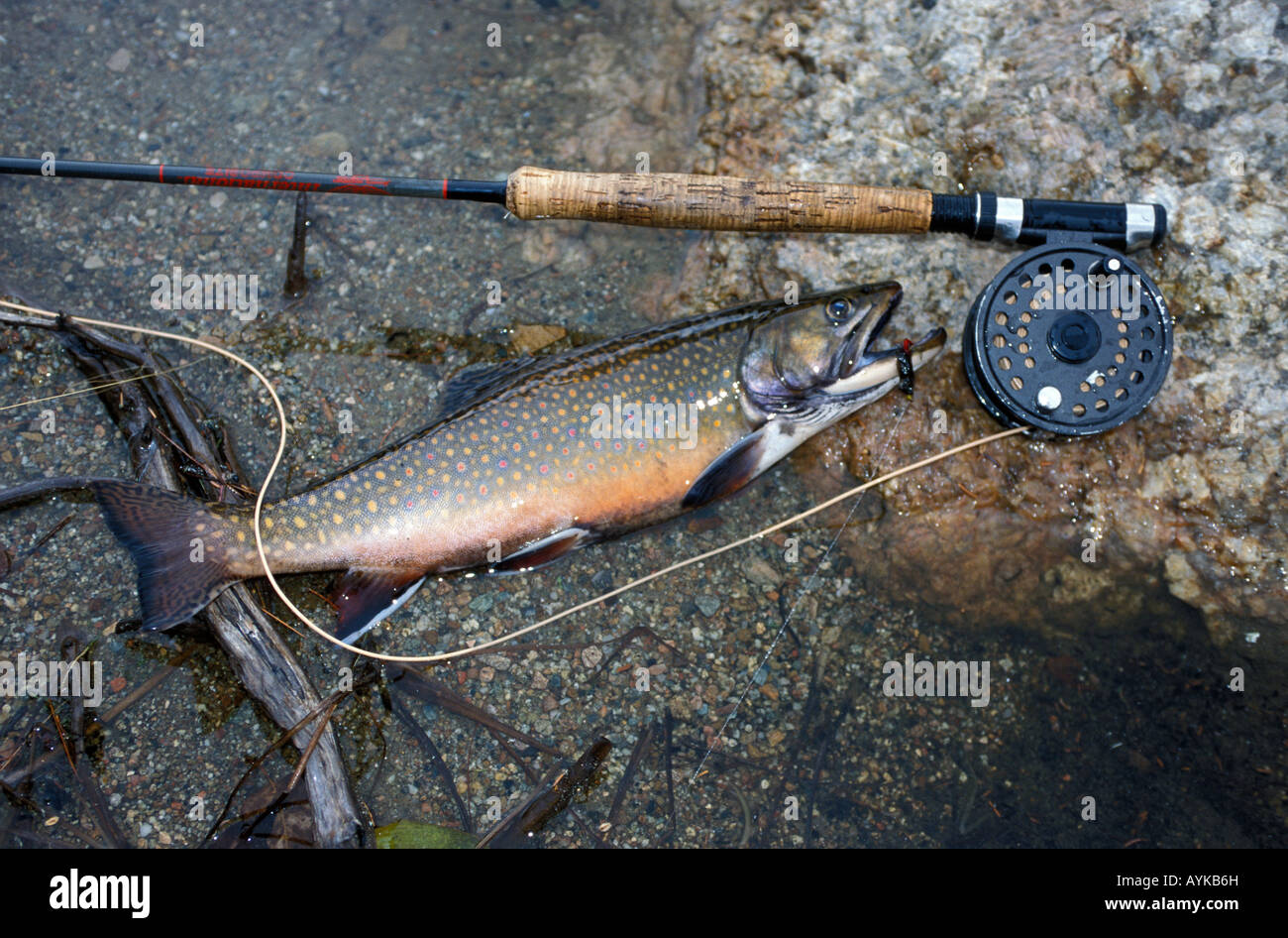 brook trout and fly rod stock photo, royalty free image: 17129464, Fly Fishing Bait