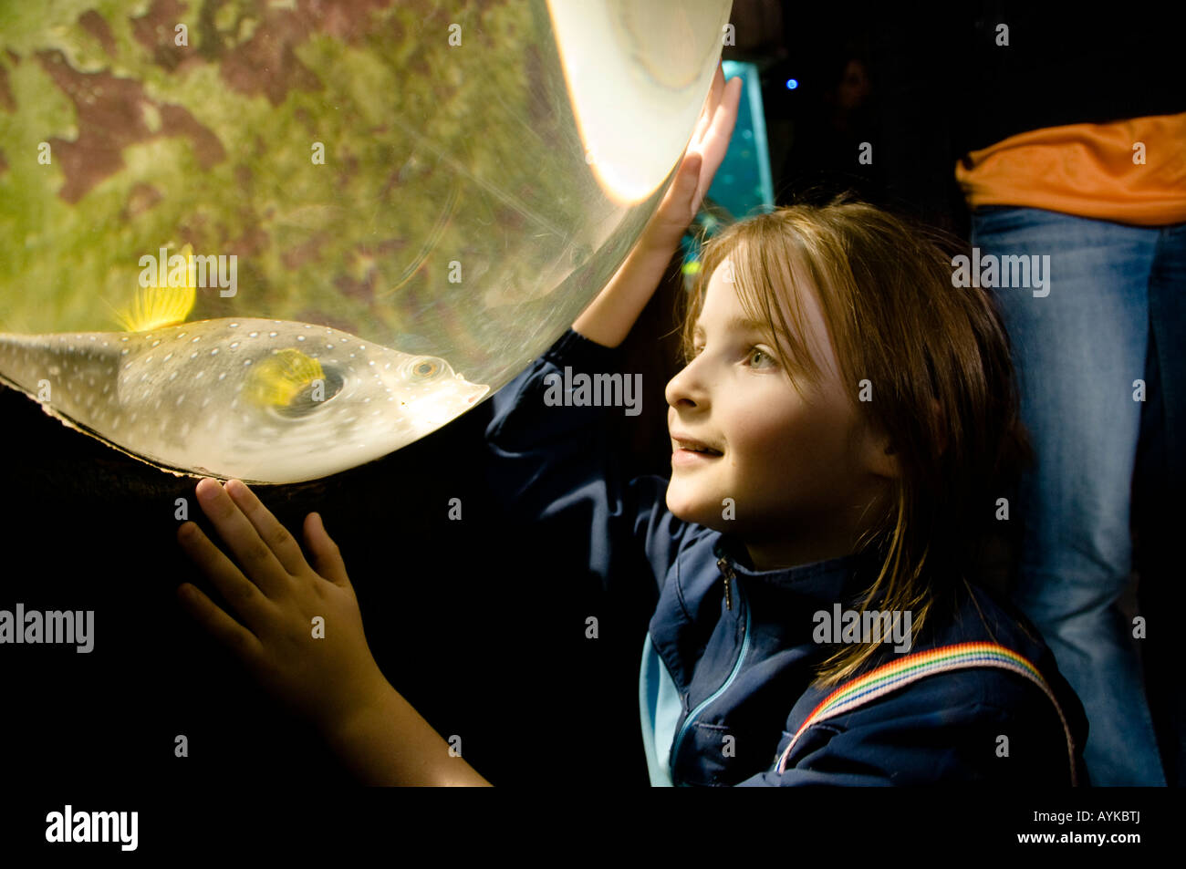 Fish aquarium kidderminster - Stock Photo Young Girl Entranced By A Magnified Tropical Fish In The Aquarium At West Midlands Safari Park Bewdley Near Kidderminster