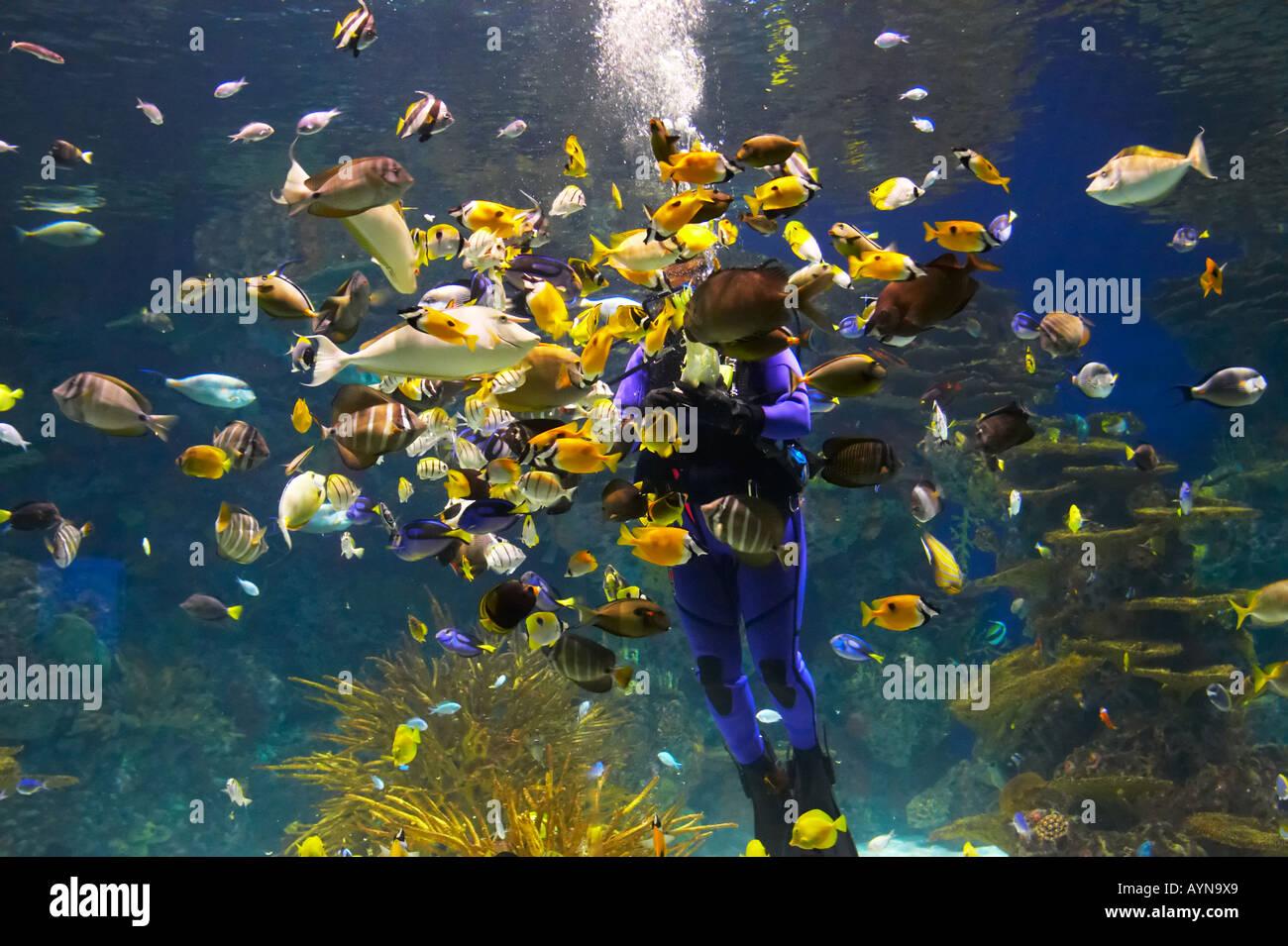 fish plenty of fishes aquarium sea tank ocean vivid feeding water