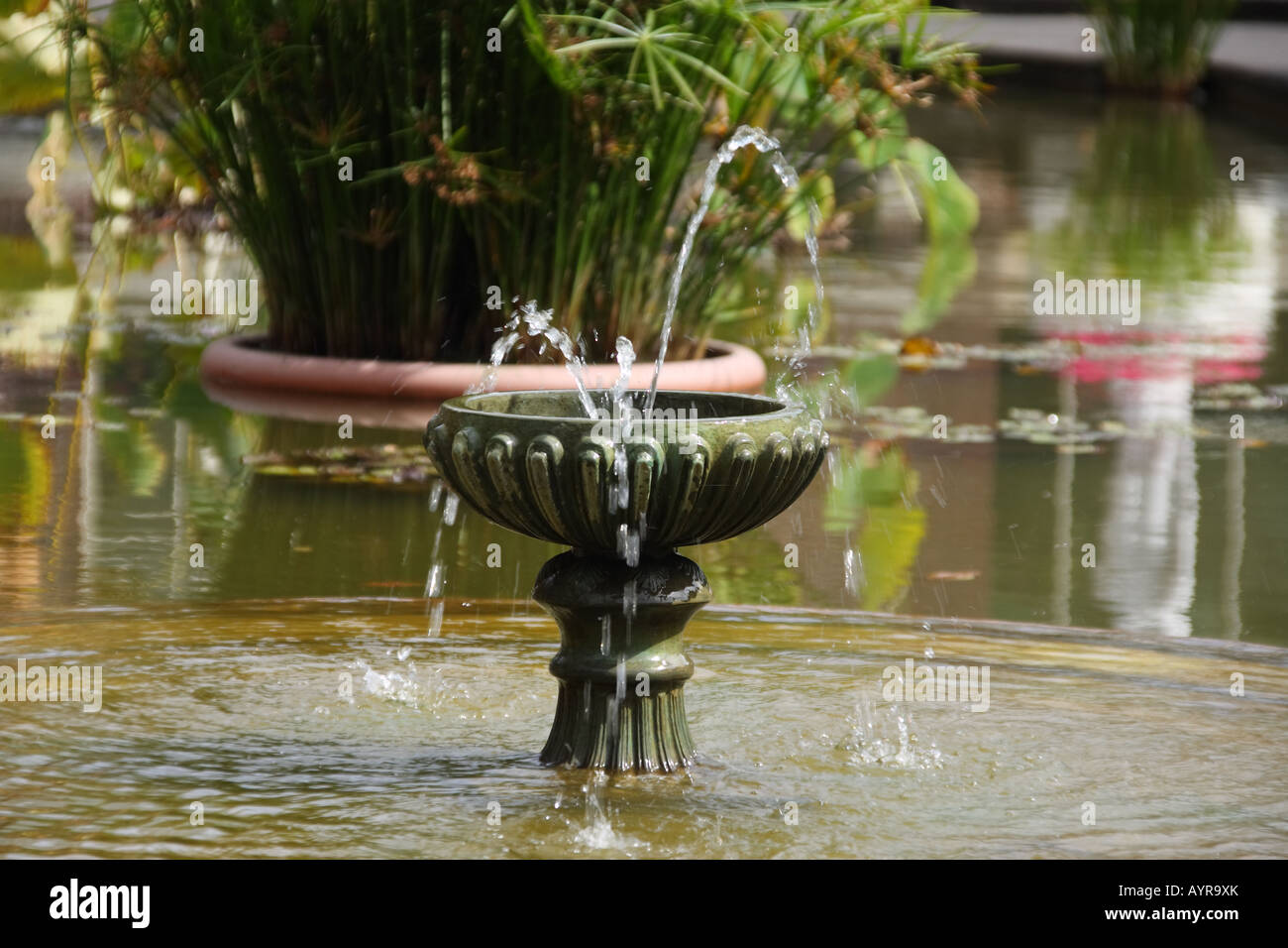 Water fountains auckland - An Antique Style Fountain Splashing Water In The Winter Garden Auckland