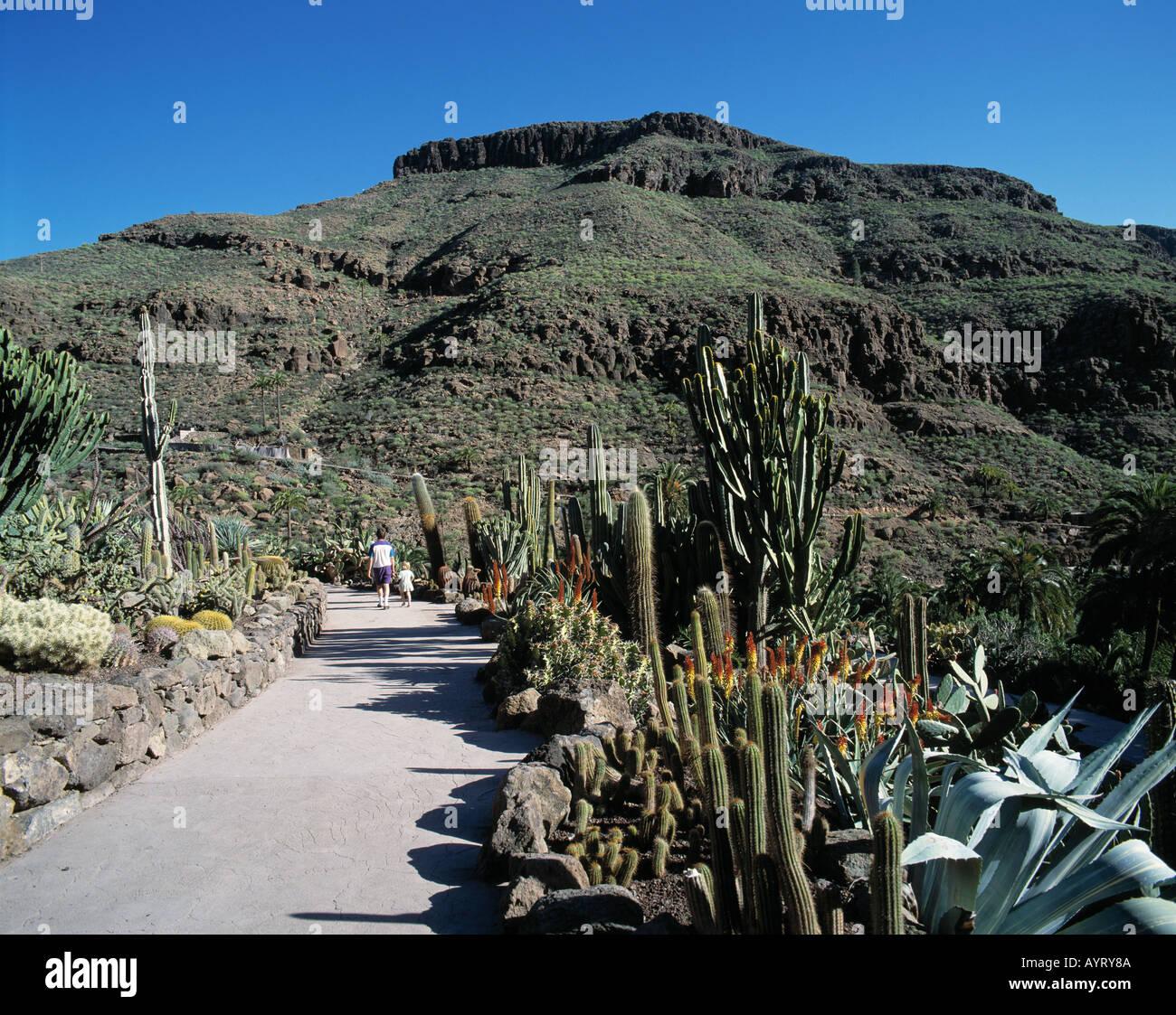 Palmitos-Park, Berglandschaft, Kakteen, Maspalomas, Gran Canaria Stock Photo,...
