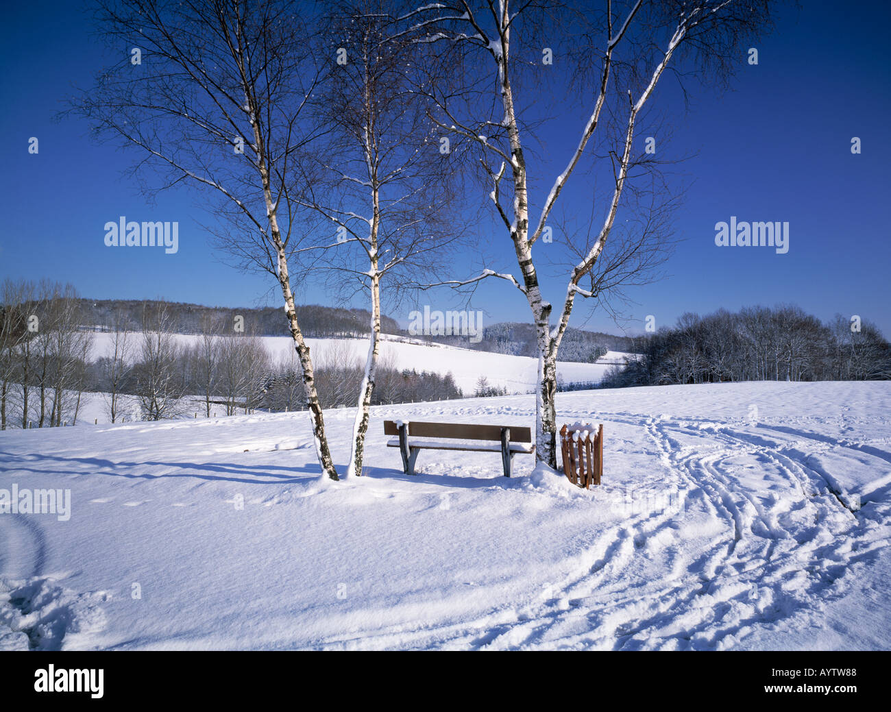 winterlandschaft verschneite landschaft bank mit birken im schnee stock photo royalty free. Black Bedroom Furniture Sets. Home Design Ideas