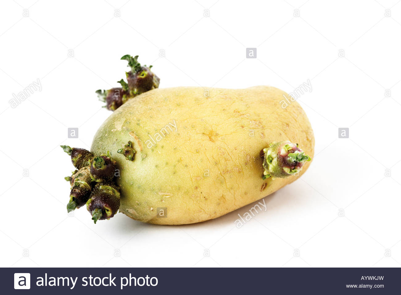 how to get seed potatoes to sprout
