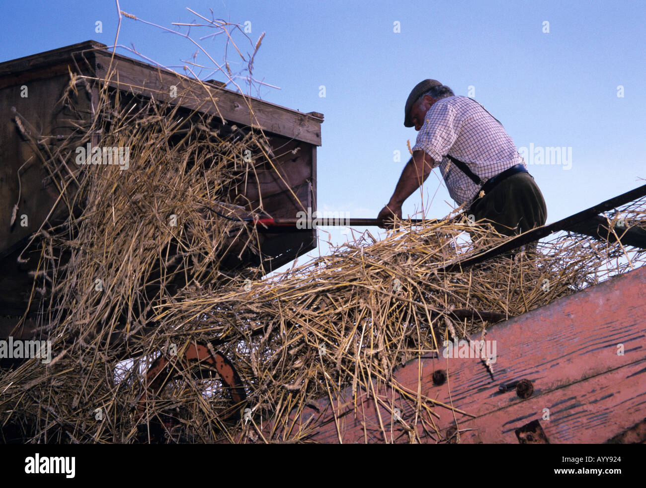 Traditional threshing long corn straw for thatching on a farm at traditional threshing long corn straw for thatching on a farm at bury st edmunds sciox Choice Image