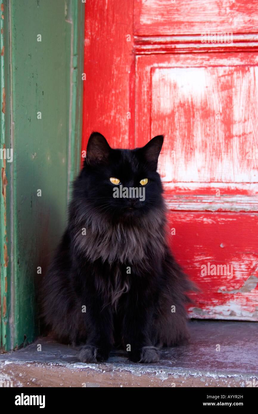 Delightful Black Cat In Front Of Weathered Red Door In Tucson Arizona