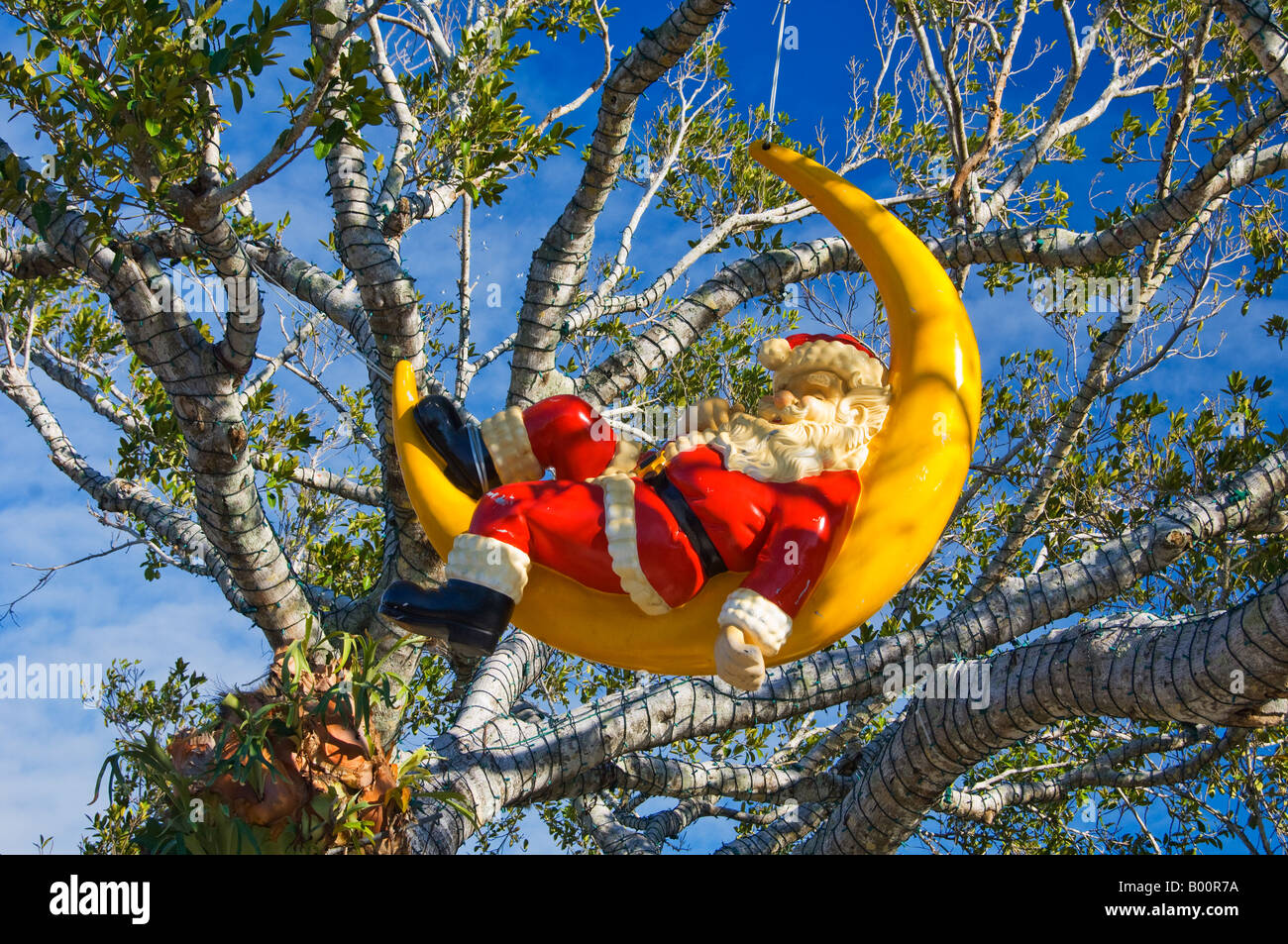Santa Relaxing In The Crescent Moon In The Trees In Naples Florida - Florida naples