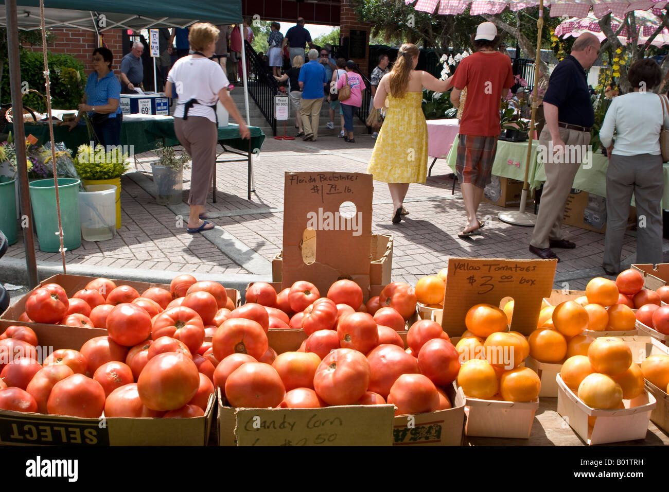 Tomatoes For Sale At The Winter Park Farmer S Market Winter Park Fl Stock Photo Royalty Free
