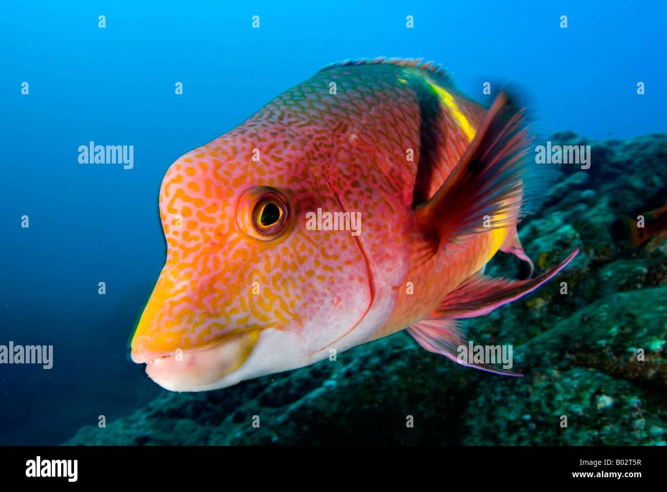 Fish In Revillagigedo Islands Socorro Islands Pacific