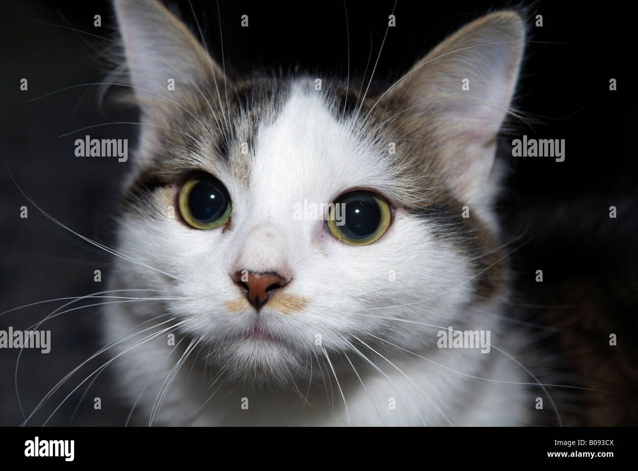 Cat With Black Markings Around Eyes
