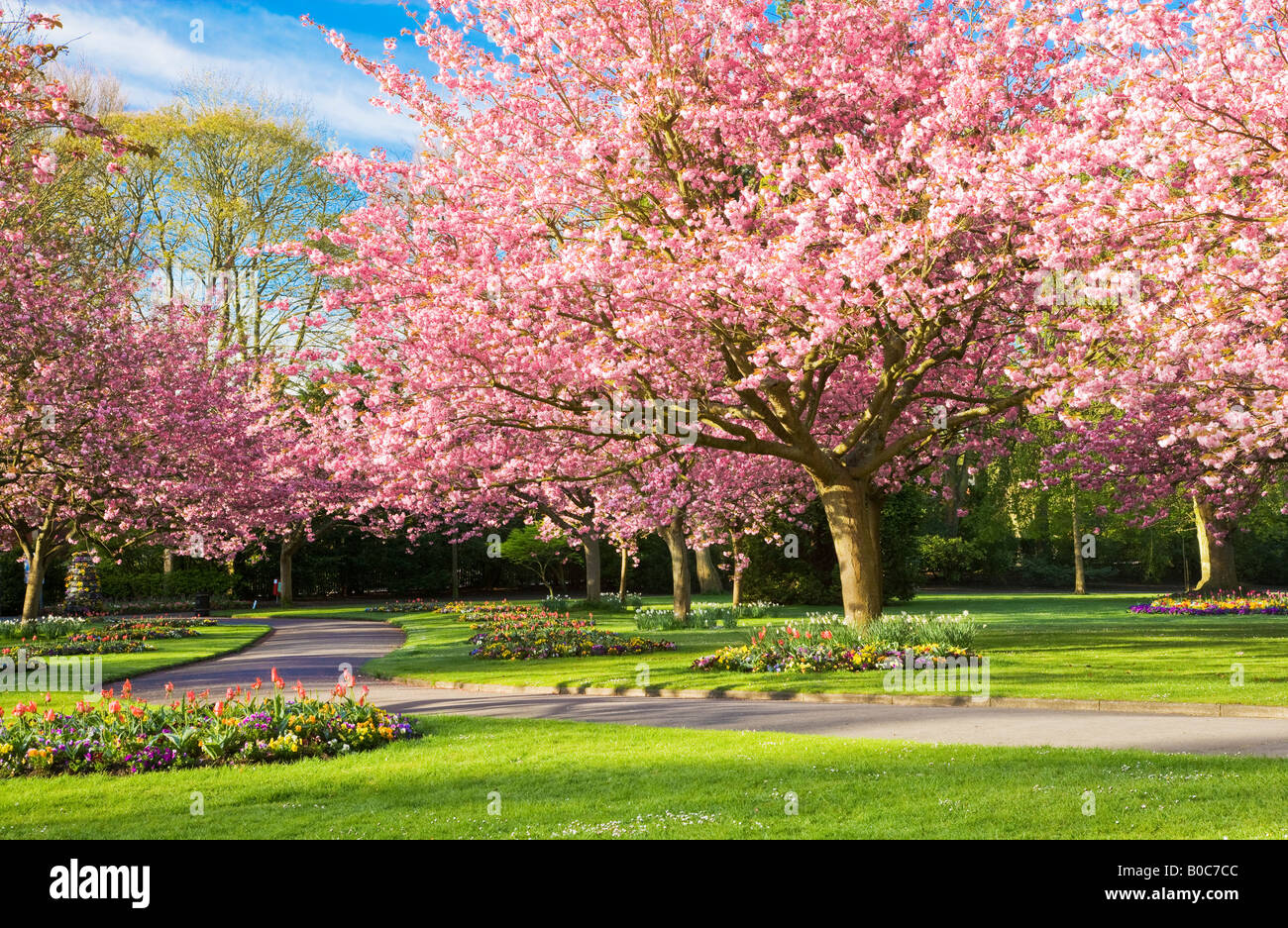 Spring flower beds and flowering cherry trees in the town for Garden trees england