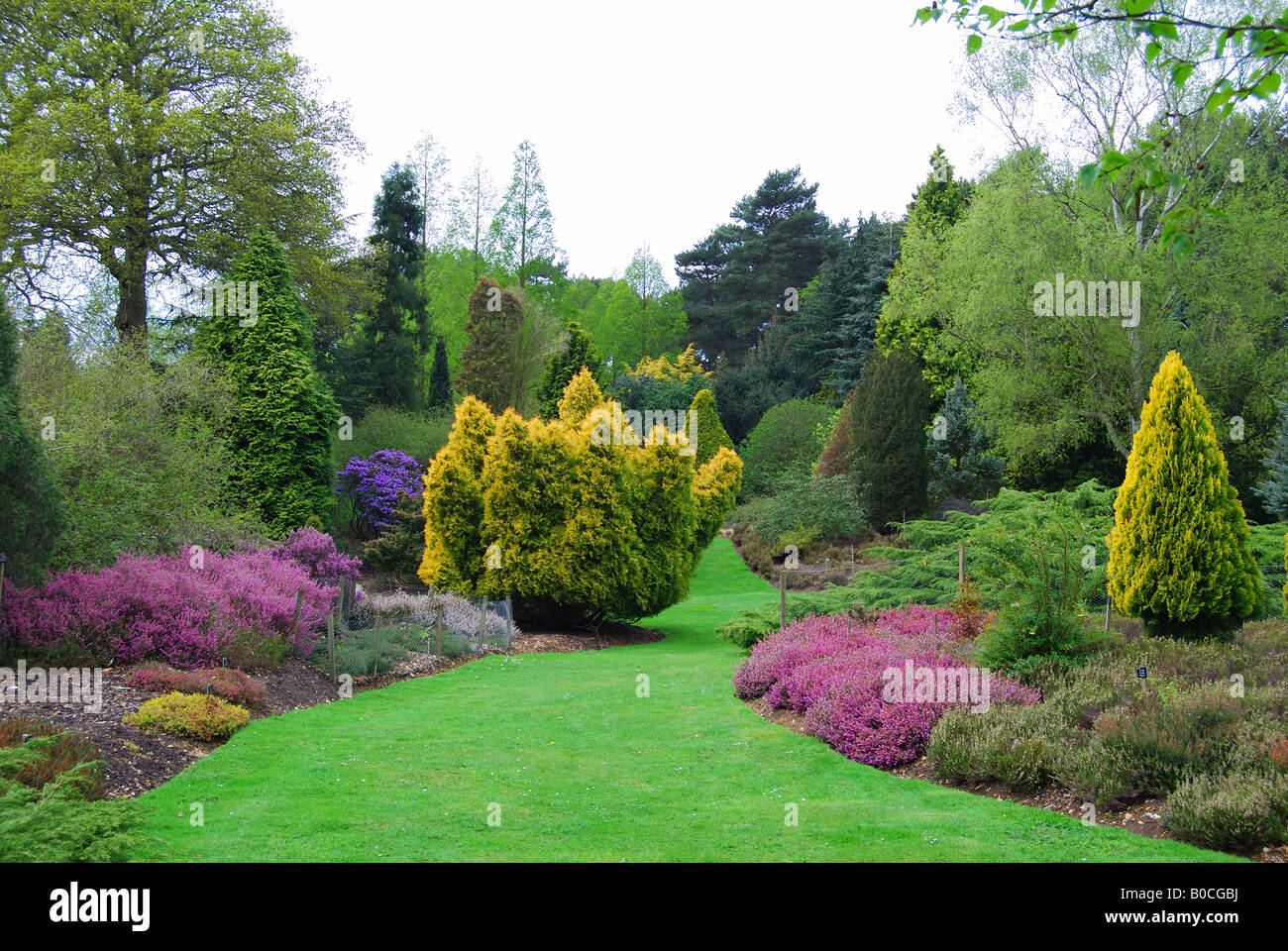 Heather Garden Valley Gardens The Royal Landscape Windsor Great Stock Photo Royalty Free ...