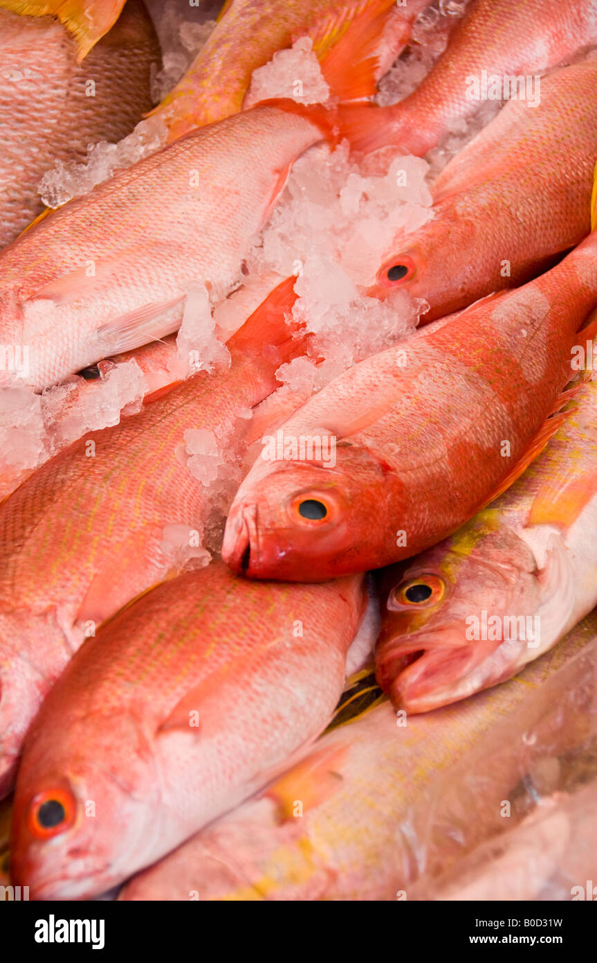 Red snapper in spanish translation for Translate fish to spanish