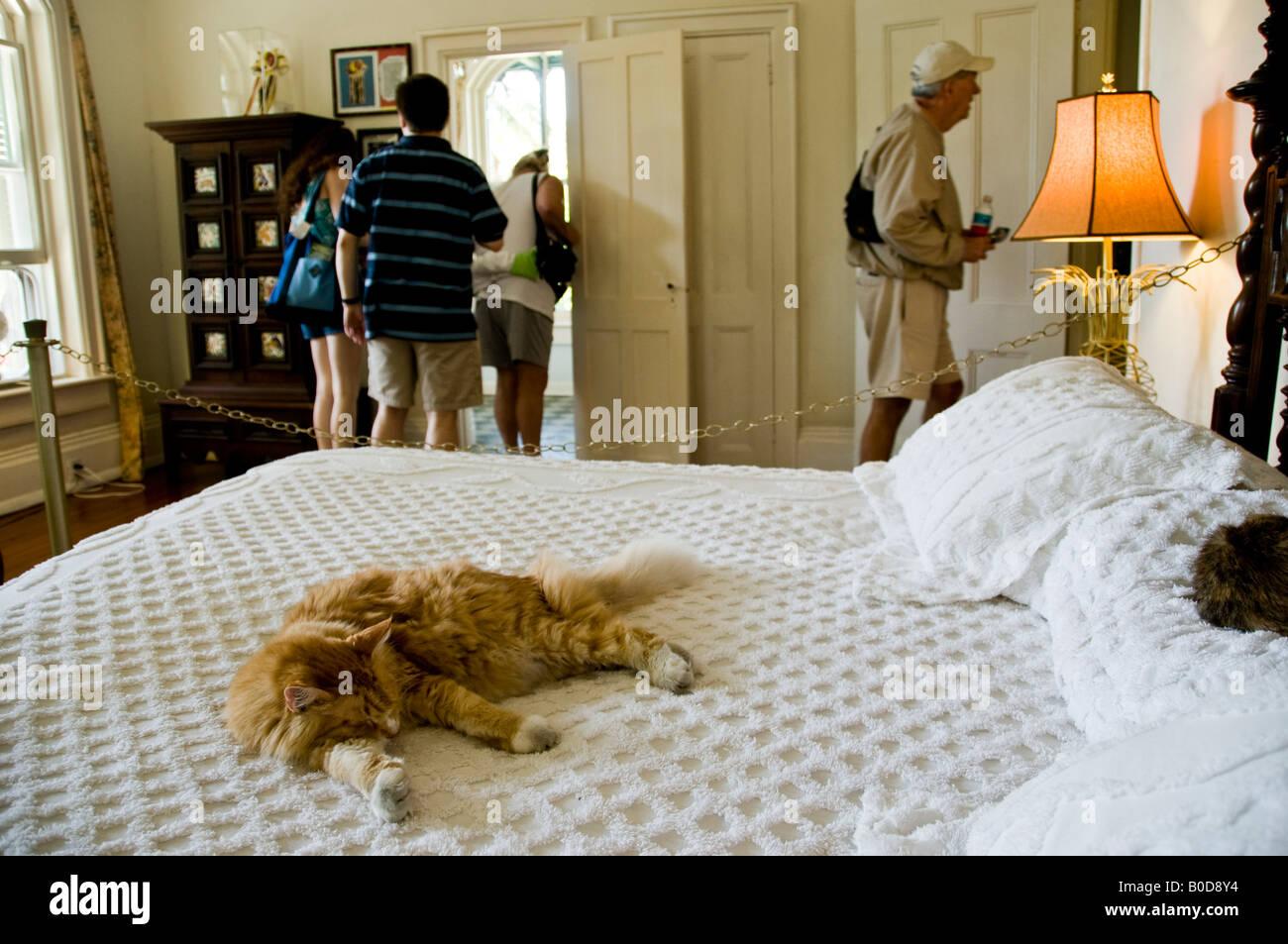 cat bedroom. Cat sleeping on a bed in the master bedroom Ernest Hemingway Home  Key