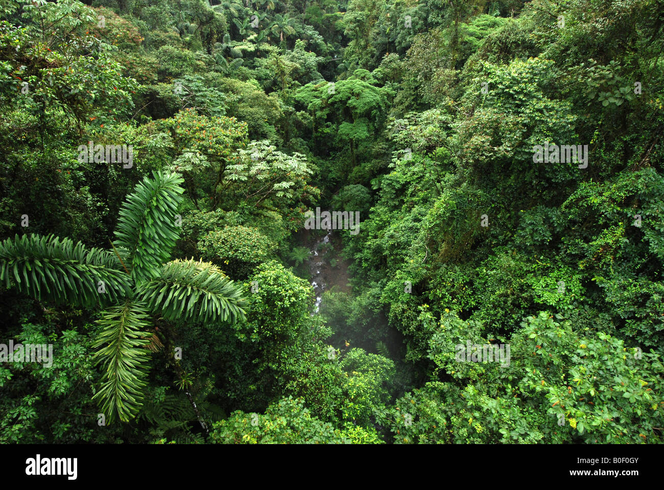 Tropical rainforest canopy Lake Arenal Costa Rica & Tropical rainforest canopy Lake Arenal Costa Rica Stock Photo ...