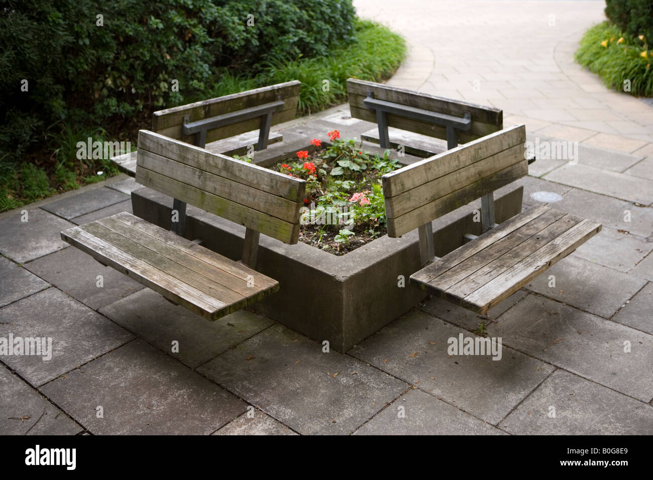 Wooden Benches Around Raised Flower Bed Hospital Palmerston North New  Zealand