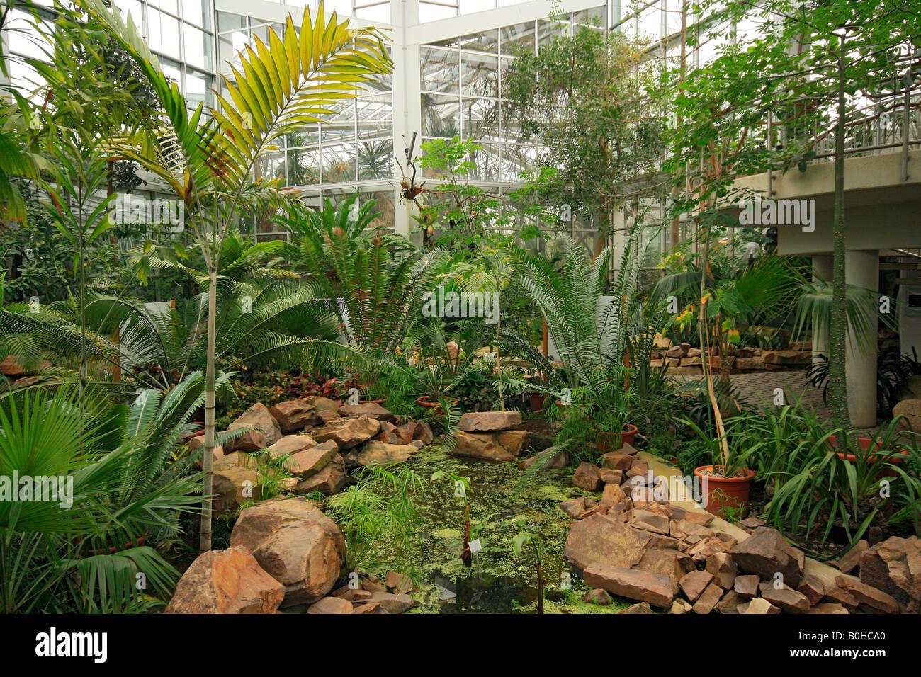 tropicarium palmengarten palm garden frankfurt am main hesse stock photo royalty free image. Black Bedroom Furniture Sets. Home Design Ideas