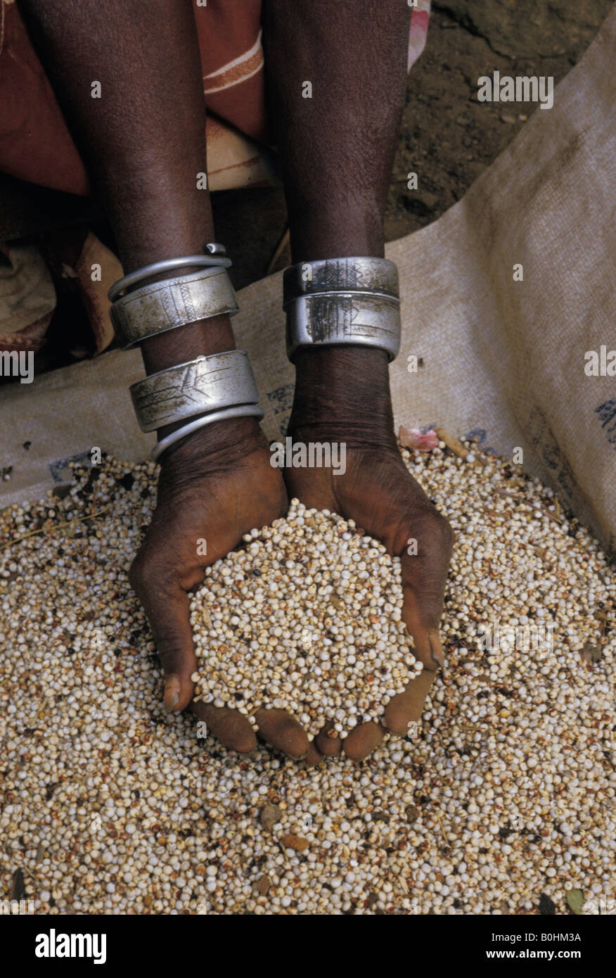 A woman\'s hands holding grain, Dura Wall, Sudan Stock Photo ...