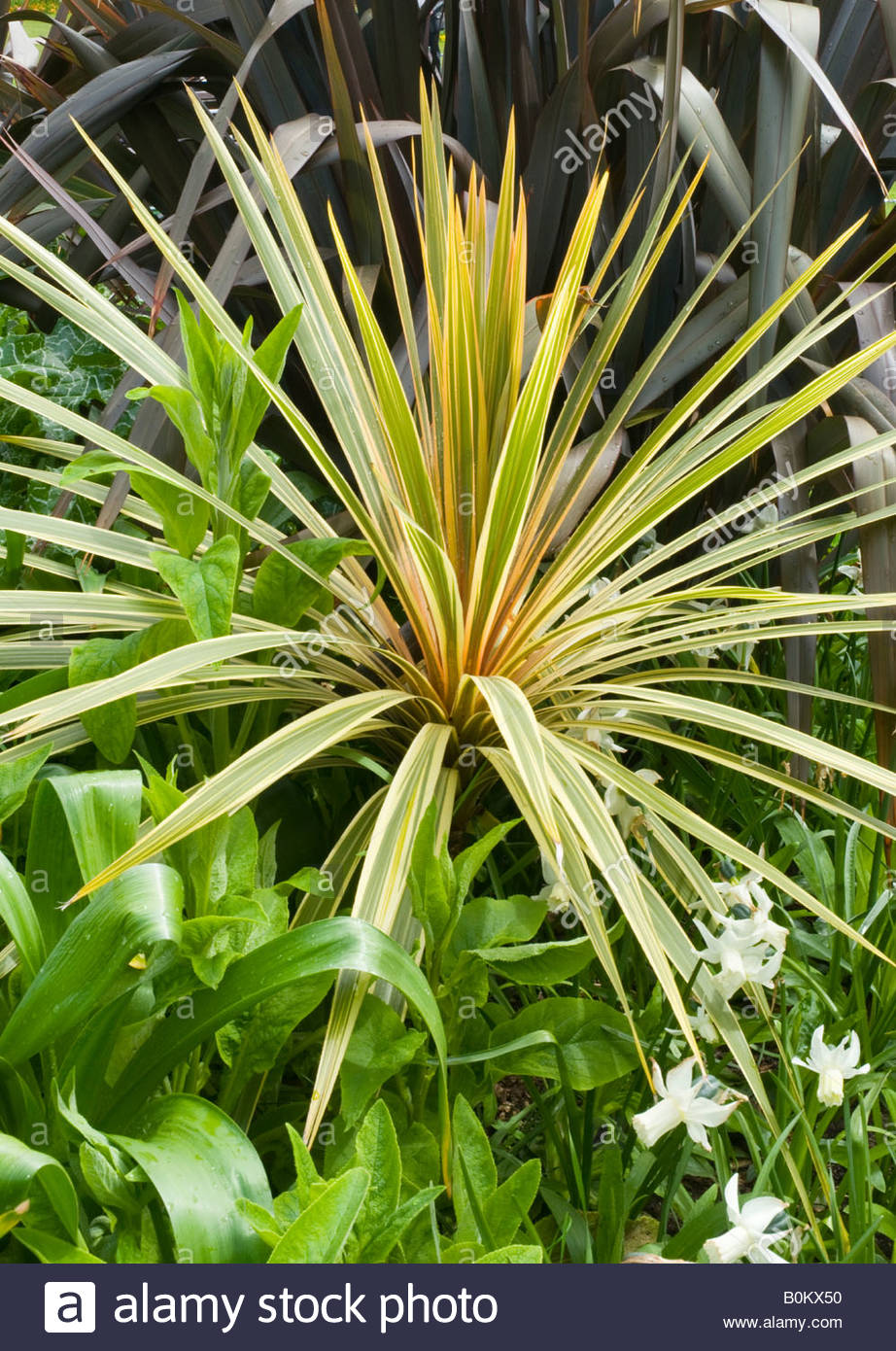 Tropical Plants Growing In Gardens Near Bournemouth Beach