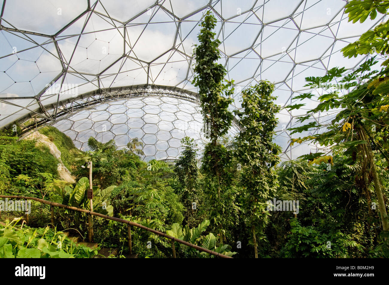 A view looking through the canopy of the tropical biome dome & Eden Project Cornwall. A view looking through the canopy of the ...